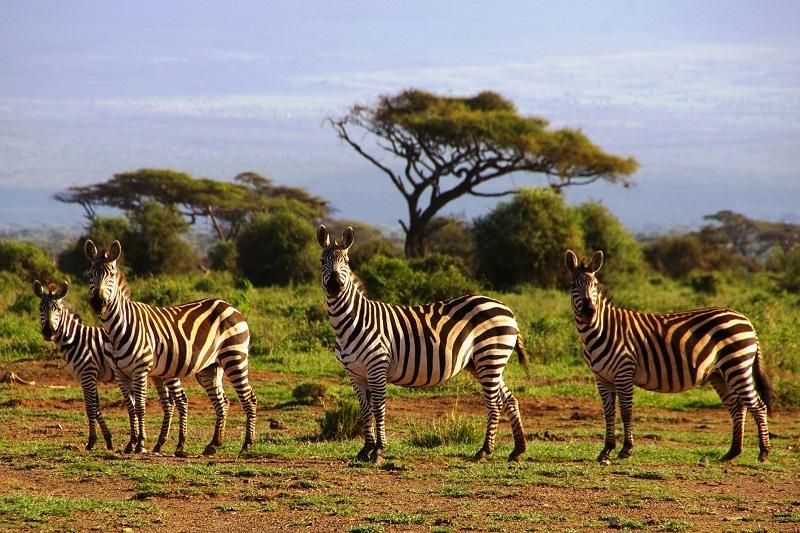 Quốc gia Kenya