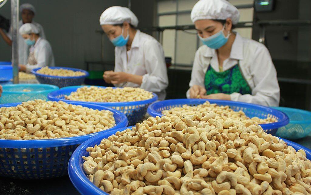 Thị trường xuất khẩu điều của Việt Nam gặp phải khó khăn về mọi mặt